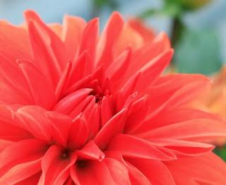 Claire Halas Blog flower
