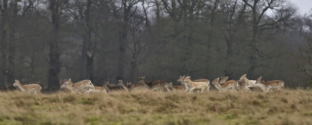 Claire Halas Blog Deer Knole Park